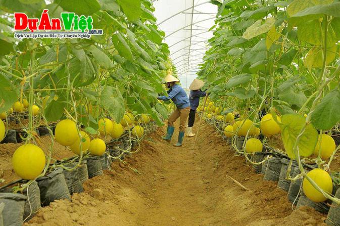Dự án xây dựng khu nông nghiệp công nghệ cao và du lịch sinh thái Phước Sơn