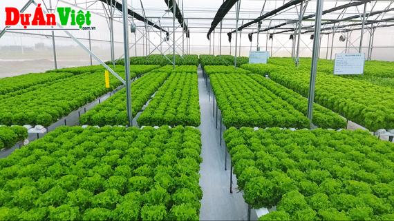 Thuyết minh dự án Nông nghiệp sạch Công nghệ cao tỉnh Nghệ An