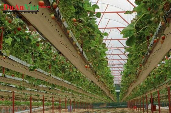 Dự án nông nghiệp và chế biến thực phẩm công nghệ cao YuNa