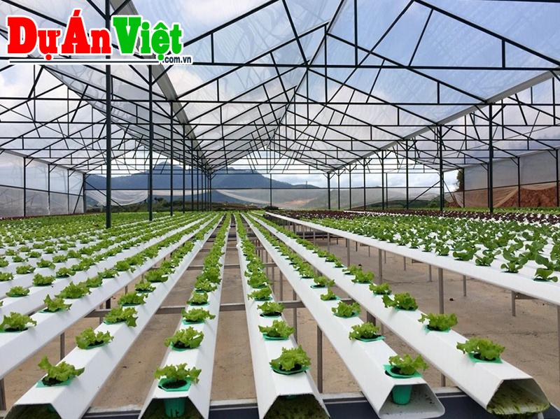 Dự án Xây dựng khu Nông nghiệp ứng dụng công nghệ cao Cư M